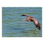 Pelícano de Brown en vuelo sobre el agua Fotografia