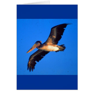 Pelícano de Brown (occidentalis del Pelecanus) Tarjeta De Felicitación