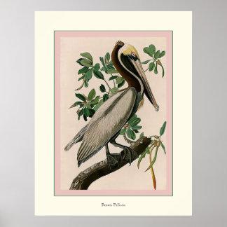 Pelícano de Brown Poster