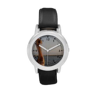 Pelícano de California Relojes De Pulsera