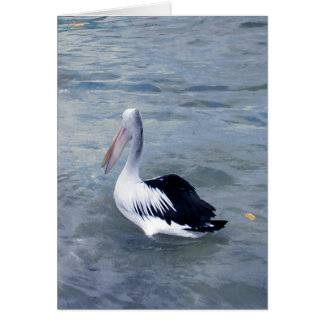 Pelícano de la bahía de la lata tarjeta de felicitación