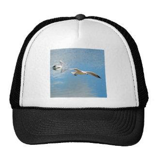 Pelícano de la gaviota en vuelo - en el agua gorras de camionero
