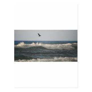 Pelícano de la playa de Horsfall Tarjetas Postales