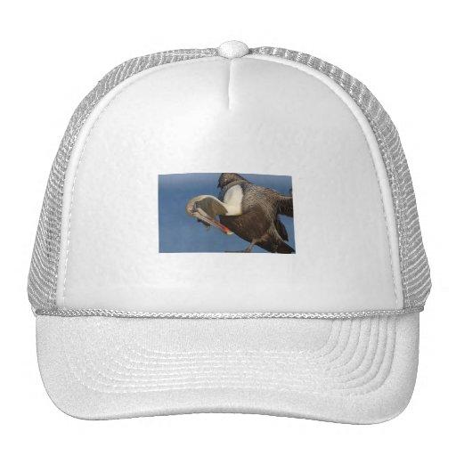 Pelícano divertido gorra