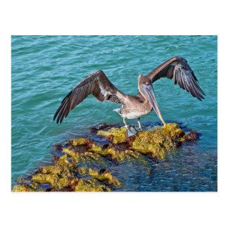 Pelícano el Golfo de México de Brown Postal
