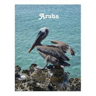 Pelícano en Aruba Tarjeta Postal