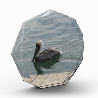 Pelícano en el agua
