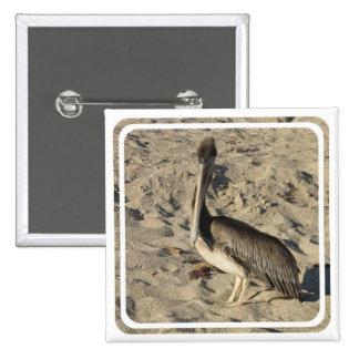 Pelícano en el Pin de la playa