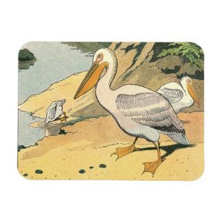 Pelícano en la playa imán flexible