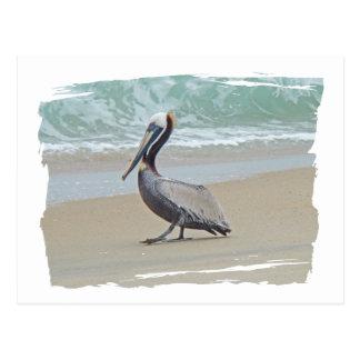 Pelícano en Outer Banks OBX NC Postal