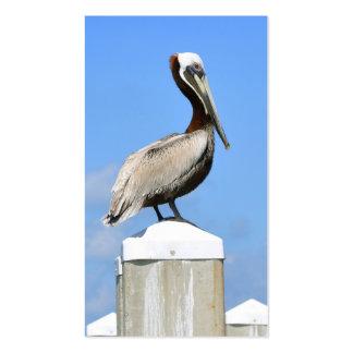 Pelícano en perca tarjetas de visita