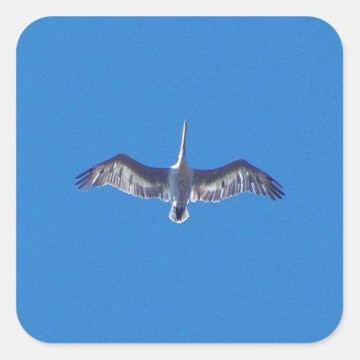 Pelícano en vuelo colcomanias cuadradases