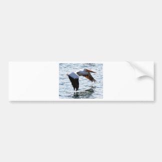 Pelícano en vuelo pegatina para auto