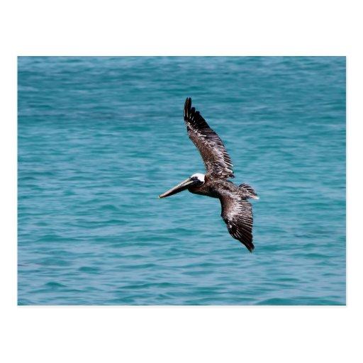 Pelícano en vuelo tarjeta postal