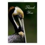 Pelícano - gracias cardar tarjeta pequeña