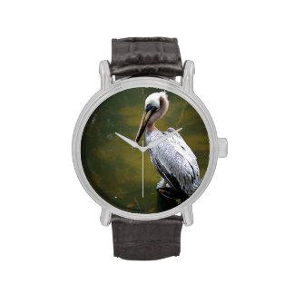 pelícano marrón cerca de la natación verde de los relojes de pulsera