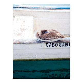 Pelícano Napping Tarjetas Postales