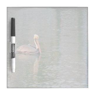 pelícano que flota en reflexiones coloridas del pizarras blancas de calidad