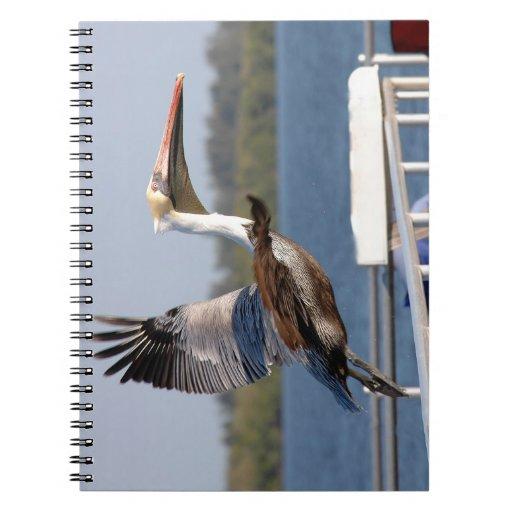 Pelícano que toma el cuaderno del vuelo