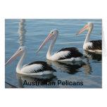 Pelícanos australianos felicitacion