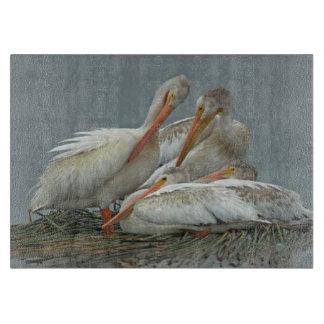 Pelícanos blancos americanos - erythrorhynchos del tablas de cortar