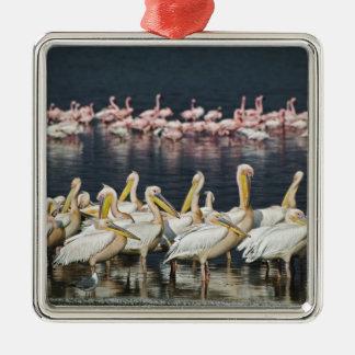 Pelícanos blancos, onocrotalus del Pelecanus, lago Ornamentos De Reyes Magos