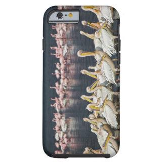Pelícanos blancos, onocrotalus del Pelecanus, lago Funda De iPhone 6 Tough