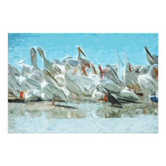 Pelícanos blancos y extracto negro del cormorán fotografía