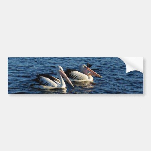 Pelícanos con los pescados pegatina para auto