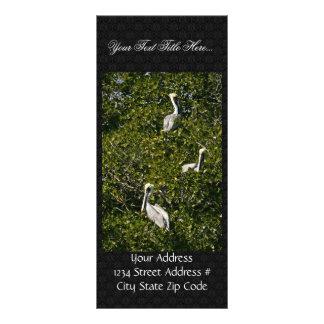 Pelícanos de Brown en árbol del mangle Diseño De Tarjeta Publicitaria
