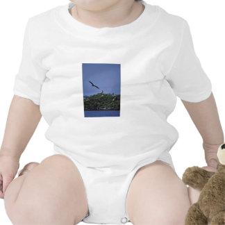 Pelícanos de Brown en el refugio Trajes De Bebé