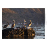 Pelícanos de Brown en roca en Puerto Escondido cer Tarjeta De Felicitación
