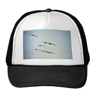 Pelícanos de Brown en vuelo Gorro