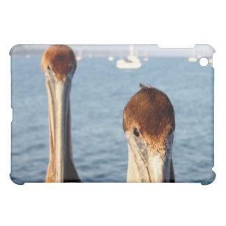 Pelícanos de California
