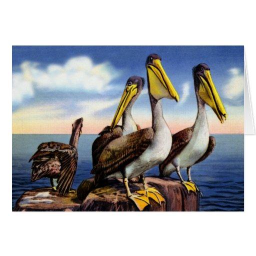 Pelícanos de la Florida que sientan en las virutas Tarjeta De Felicitación