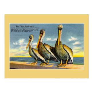 Pelícanos de los mosqueteros del vintage tres de postal
