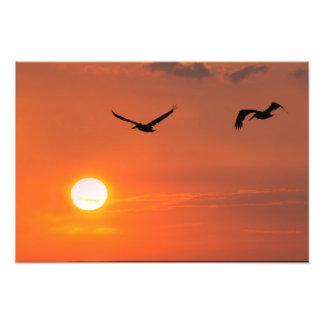 Pelícanos de Tejas en la puesta del sol Fotografías