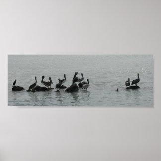 Pelícanos en esperar poster