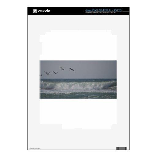 Pelícanos en la playa de Horsfall, Oregon Pegatinas Skins Para iPad 3