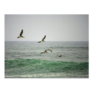 Pelícanos en la playa de Horsfall Oregon Postales