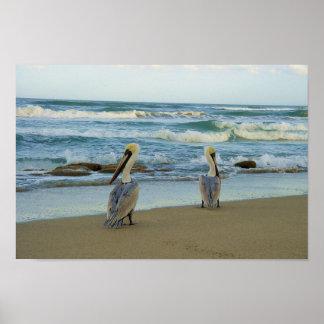 Pelícanos en la playa de Jensen en la Florida Poster