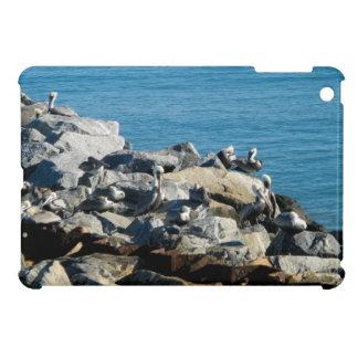 Pelícanos en las rocas