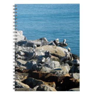 Pelícanos en las rocas libros de apuntes