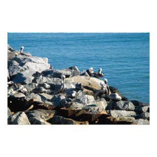 Pelícanos en las rocas papeleria