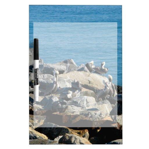 Pelícanos en las rocas pizarras