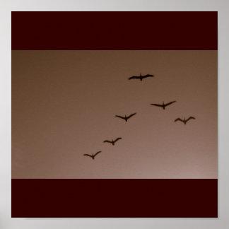 Pelícanos en vuelo Galveston Tejas de Brown Impresiones