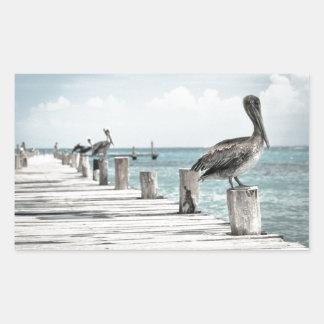 Pelícanos hermosos de Brown y agua azul Pegatina Rectangular