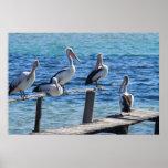 Pelícanos Impresiones