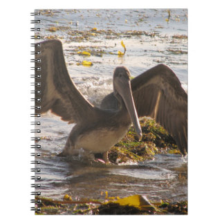 Pelícanos Cuadernos