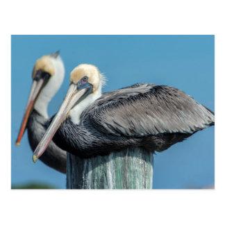 Pelícanos roosting en el pilón postales